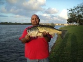 THIS LARGEMOUTH BASS 1S A 12.58 POUNDER 26 INC. AND WAS COUGHT BY MANNY DOMINGUEZ IN CUTLERBAY FLORIDA ON MARCH 8, 2011 @ 5:50 PM USING A BLACK WORM ON A SLOW RETRIVE. BASS WAS RELEASE ALIVE.