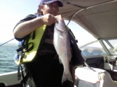 caught this striper june 5,2011. at lake pleasant arizona.