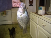 parkers 13 inch crappie