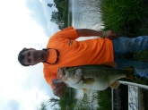 I caught this 10lb bass out of a farm pond that was dug and stocked with brem and catfish 10 years ago, around two years after the pond became overstocked. We decided to use nets to thin out some of the fish and ended taking I would say around 40% of the fish. Me being a big time bass fisher I decided to keep some of my catch of bass from creeks and ponds and only put 4 bass no bigger than 2.5lbs, the pond was then not fished until 4/10/14 Keep in mind there has never been a bass caught out of this pond not even in the nets, and caught a bass 3 lbs eight years later, I was ecstatic. after that i begin to think about how I caught this fish and didn't like it, I was  fanning the lizard from one spot making multiple cast in the same spot down the bank and from the deeper water to the bank, eventually while reeling in my bait from the area I wanted to fish I slowed the lizard a few feet from the grass  and my feet she swelled up on it. the same thing happened with this ten pounder a few days later in a different location on the pond. Sense 4/28/14 when I caught this bass Ive fished everything in my box even got a jon boat to cover the whole pond and cant even get a bite from anything but brem really don't know what to think.