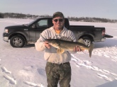 This walleye was caught on a public Minnesota Lake. It measured 27.5 inches and weighted around 8 lbs. The person who caught this fish practiced catch and release.