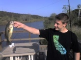 I caught this fish at Lake Miramar, CA, this fish weighed in at 2.3 lbs, and caught it on a jerk bait