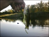 this is just too funny! watermelon seed old monster by zoom 10.5 inch worm 9 bass.