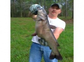 i cought thic cat in a small farm pond using a zebco 33p with live worms it weighed out at 12.6 lbs