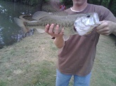 I caught this 5 Pound Bass in a private lake in Temple,Ga with a 7 inch watermelon/pepper lizard.