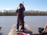 Caught this 60 lb. paddle fish on the Osage River near Warsaw MO. on April 15, 2009.