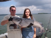 22 Pound Blue Catfish On Lake Monticello using Cut bait.