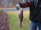 caught in a small lake by my house Dec.21 2009 in less the 2 feet of water.