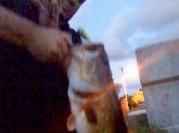 This Bass was caught on a popper at dusk under a bridge on lake Osborne in lakeworth,Fl. Did not have a scale but it was 7  lbs for sure. Sorry the photo is bad quality.. low light conditions using a iphone.