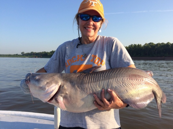 28 lb catfish caught on ms. River on July  21, 2016