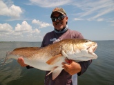 This redfish was caught by Capt. David Rogers in June on the Indian River Lagoon in Titusville, Florida. The fish was taken on blue crab on light tackle. A Fin-Nor Heavy action 7 foot rod with a Quantum Cabo 20 and 10 pound Berkley Invisi-Braid with a 20 pound flouro-carbon leader. The fish was 48 inches in length and the weight was wll over 40 pounds. I don't weigh these fish due to the stress it can place on the fish.