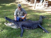 not a fish but a 12.4 foot gator ot of seminole lake. weighed about 600 to 700 pounds lots of fun.