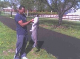 This cat was caught on the Potomac River off of Bolling AFB, DC. Didn't weigh him though.