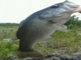 I caught this bass at my freinds house with a storebrand crankbait lure.The bass weighed about 3 and a half pounds!