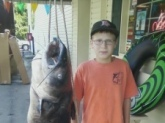 47.5 pound Blue Catfish caught on Badin Lake, North Carolina, on July, 27, 2011 by 12 year old Drew Mathison, using cut bait.