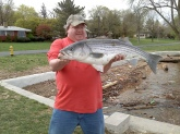 caught on Delaware river, Riverton, NJ. April 19th 2013. striped bass, 36 inches 22lbs.