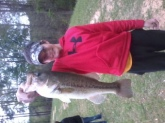 solid 4 lb. bass on live bream