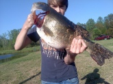 12 lb hog. caught on a black buzzbait in my pond on bed
