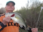 Crescent Bend Nature Park, Cibolo Creek. Cibolo, TX. Zoom pearl white fluke, 5/0 hook, 6# test.