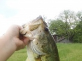 I caught this georgus 5 pounder at my Grandpas Pond.....