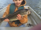 This is my 8 year old son, Joey, with his first large mouth. It weighed 5.2 lbs. We were fishing chartreuse lizards weightless in a school of suspended bass in 30 foot of water. He fought the fish all by himself and I lipped the fish for him. Hard to tell which is larger, the bass or his smile. This is the beginning of a life long fishing passion. He skunked his old man that trip and says he will be with me every weekend on the water. Just thought you might enjoy the pic.