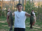 I caught these to striped bass at Logan Martin Dam in Alabama. The one on the left wieghed rite at 15.6 lbs and the one on the right wighed 12.3 lbs. Very happy with my catch. Was using live shad.