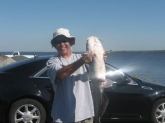 In Morgan city La I caught this 38 pound Blue Catfish. Best thing I used a 12 dollar Walmart rod and reel.