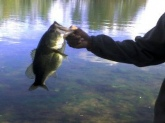 caught at hawk island county park, about six pounds. my biggest bass!