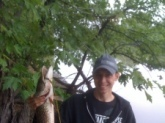 Nice 7lbs Northern Pike Caught On Des Plains River,IL In Mid-May, Using Chicken Breast For Bait