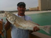 Andrew caught this redfish off of Panama City Beach. He had to toss his rod to the beach and finish the job from shore. Of course, it was too big to keep, so he successfully released it back into the Gulf.