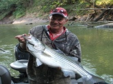 A 29 pound Rockfish caught in the Red River, Clarksville, Tn.