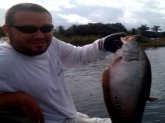 Clown knife fish at Lake Ida in Delray beach Fl. Using wild Shiners. 10  lbs. I had to go home and look it up because I had no clue what it was. Good fight though!