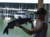 Thats How you catch a Cat on a flyrod. Tellico lake TN