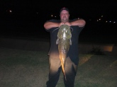 28 lb. Flathead caught on the banks of the Mississippi River in Memphis, TN. on a live Bluegill.