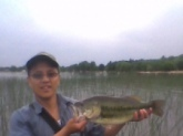 I caught this 19inch largemouth bass with a scum poppen frog all yellow, this baby was on the egde of the cat tails on George lake, MN